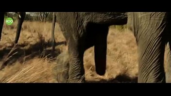Video sex new Elephant party 2016 HD online